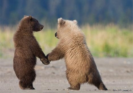 bear lovers